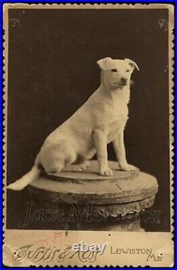 RARE Antique Cabinet Card Hoy the Singing Circus Dog Photo / Lewiston Maine
