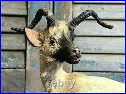 Vtg Antique Victorian Miniature Antelope Kudu Taxidermy Circus Zoo Glass Eyes